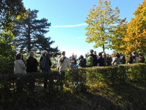 Germaniahügel: Herbststimmung unter und über der Linde